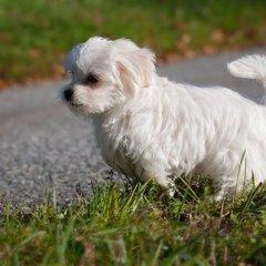 Puppy Potty Training